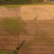 Droogte gras
